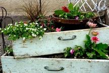 For the Garden / by Renee Kohlman