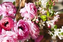 Flora / by Renee Kohlman