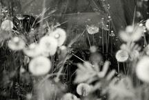 Photo Love / by Renee Kohlman