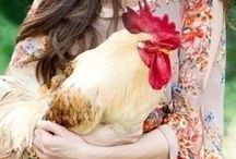 Chickens / by Caroline Van Slyke