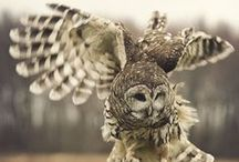 the owlery (& other things with wings)