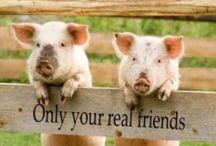 Piggies / All Things Piggy