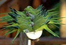 DIY bird toys/birds/info