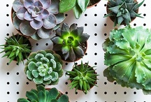Green & Upcycling / Green & Eco Friendly products and practices we think are worth sharing!   www.insidesource.com