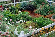 Kitchen Garden Inspiration  / Veggie garden ideas and tips