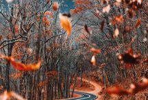 {autumn}