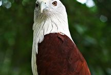 Birds of Prey / by Cheri Collins
