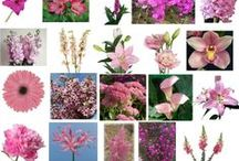 Flower choices by color