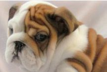 Bulldogs / They are known by the choice of a mascot to represent a tough and tenacious character the cutely mugged Bulldog. The Bulldog