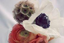 Botanicals / by Amanda Raabe