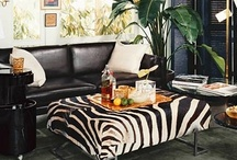 Zebra Love / by DwellStudio