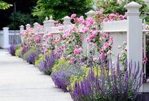 Garden Ideas / Ideas for my flower garden | Blogger & SAHM to 3 little girls under 6 | @jayjawkmommy | Web: jayhawkmommy.com