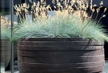 Outdoor - Pots & Planters / by The Small Garden