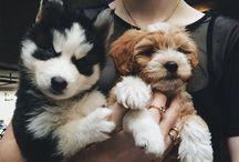 Puppy Love / by Molly Kusilka