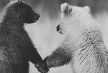 """PHuzzy Wuzzy Wuz... (PHurry, Crawly, PHeathery, Scaly, Slippery, Slimy) / Animals, Insects, other living things & what pops up about them... Board name from the kid's rhyme/song """"Fuzzy Wuzzy was a Bear"""" & """"The Ballad of Fuzzy Wuzzy  (latter song's is cute -  song i came across @ YouTube). Both songs are among the pins. / by PHyllis Collins-Curtis"""
