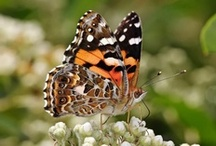 """ButterPHly Kisses / ButterPHlies & other PHluttering, PHlying creatures... bees, moths, dragonphlies, etc. Board Title: """"Butterfly Kisses"""" -  Bob Carlisle. The song is among the pins. / by PHyllis Collins-Curtis"""