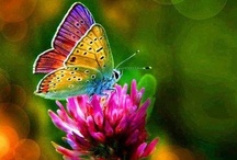 BEAUTIFUL BUTTERFLIES / by Janice Daniell