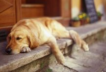 Too Stinkin' Cute aka Pups / by Paige Carmichael