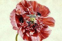 Art - Jan Van Huysum / Floral artwork by Jan Van Huysum.