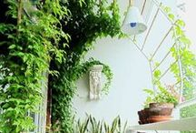 Garden/apt container/small / by Christine Mathison