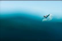 SWIM LIKE A FISH / by Kim Spencer