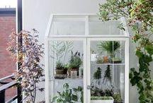GARDEN-PLANTS-FLOWERS
