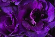 Purple / by Anne Davies