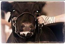 Livestock <3 / by Katherine Salom