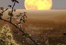 Moon Sightings