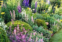 garden ideas / by Emma Jones