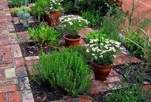 Plants/Landscaping / Gardening and landscaping inspiration for your front yard, patio area and back yard.