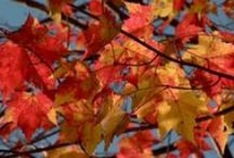 School: Fall Theme