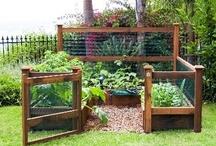 Grow It / Gardening