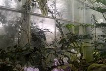 I Dream of a Greenhouse/Conservatory / by Dawn Neighbors
