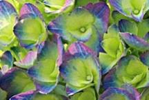 Colors / by Katie Arminie Art