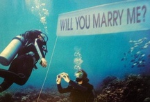 Proposals / Capturing that special moment / by Lighthouse Inn
