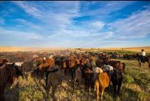 Montana Ranches and Rodeos / In Montana, ranches have a history nearly as big, diverse and rich as our miles of terrain, each offering their own flavor of the old west. Ranging from rustic to luxurious, our ranch destinations are sure to serve you a shot of pure Montana.