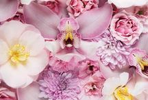 Beautiful Blooms / by Kate Byron