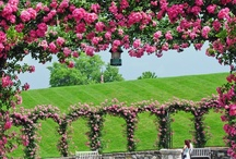 Amazing Rose Garden / by Erika Moore