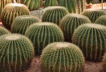 Plant kingdom