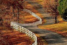 Fall / by Maralee