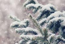 Winter / by Cristine Rasmussen