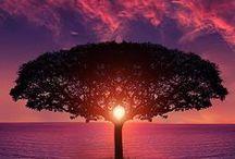 *Beautiful Nature-Color--- / by Shun Watashima