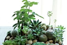 Pottering / plants and how to keep em happy