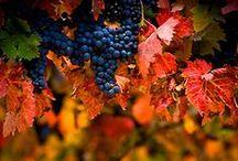 Beautiful Vineyards / by Shun Watashima