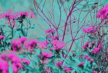 Flowers & plants!