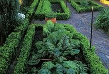 Vegetables / Ways of improving the humble veggie patch!