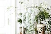 GARDENS / Indoor, outdoor, vertical, horizontal. We got it all! / by Ariela Najman