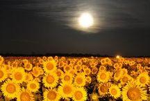 *Beautiful Nature-Flower--- / by Shun Watashima