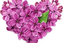 Cuori - Love- Amore - Coeurs / love